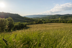 Paysage d'Aveyron